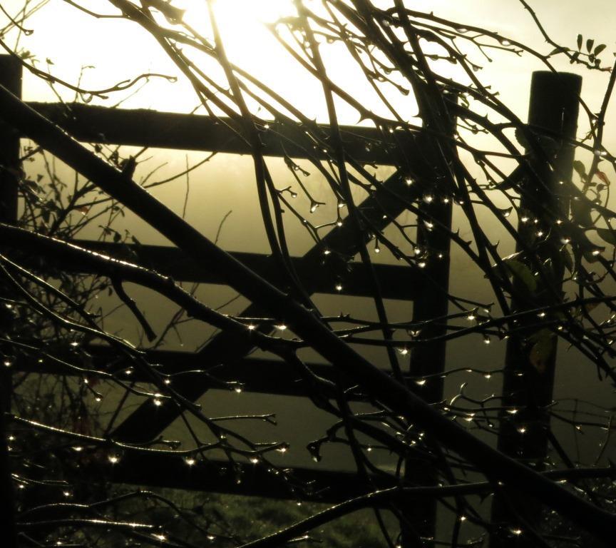 gate seen through raindrops